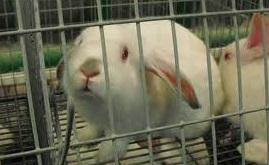 konijn opgesloten
