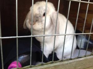 verkoeling konijn